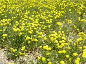 Super 6: Arizona Yellow