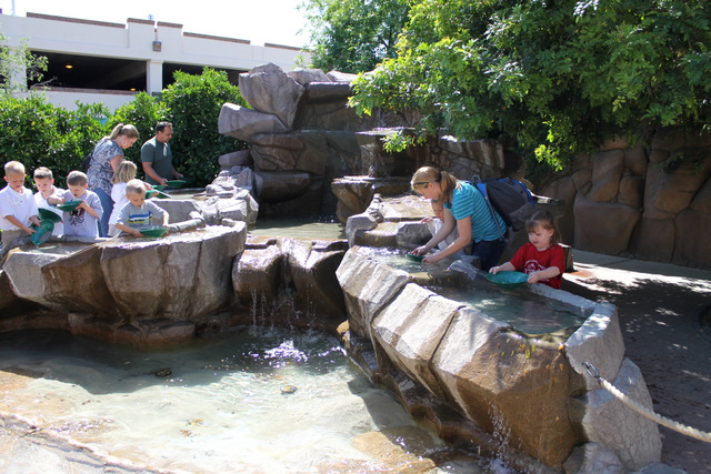 Arizona Museum of Natural History - East Valley Mom Guide