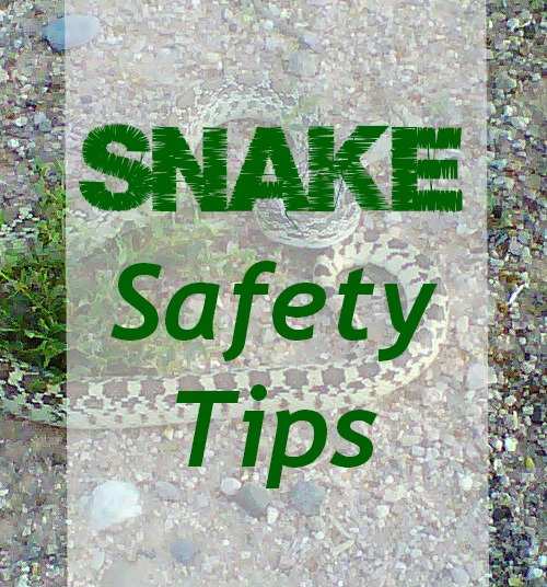 East Valley Mom Guide: Snake Safety Tips