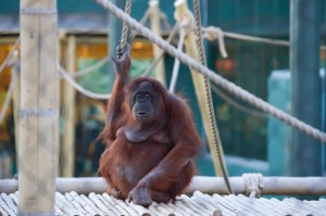 Remembering Duchess – Phoenix Zoo