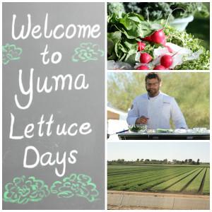 Visit Yuma & Yuma Lettuce Days