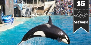 15 Reasons to Love SeaWorld