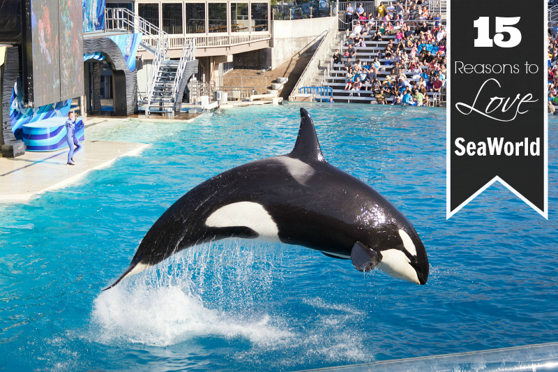 15 Reasons to Love SeaWorld